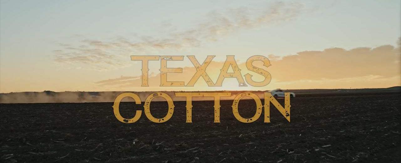texascotton4